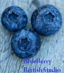 BlueBerry British Studio